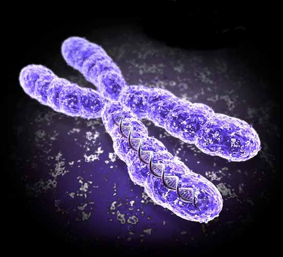 cromosoma01