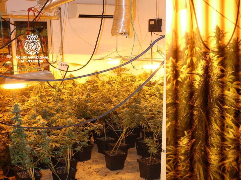 Foto plantación y detalle de planta
