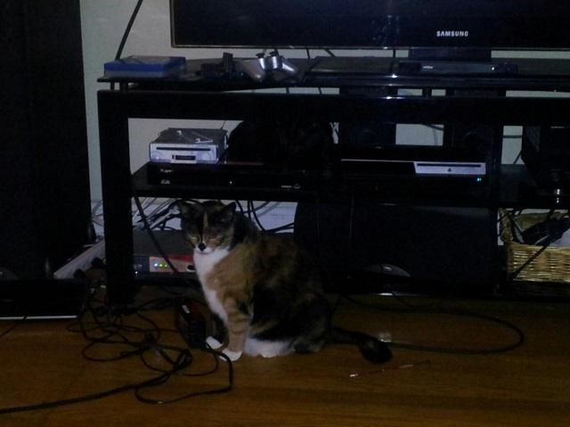 gato-escondido (11)