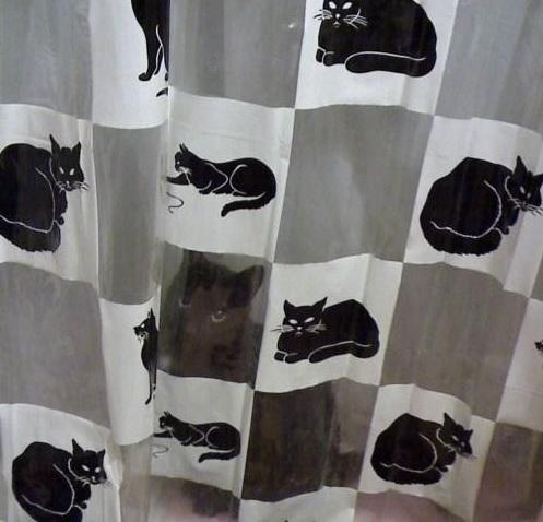 gato-escondido (4)