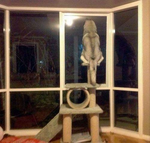 gato-escondido (8)