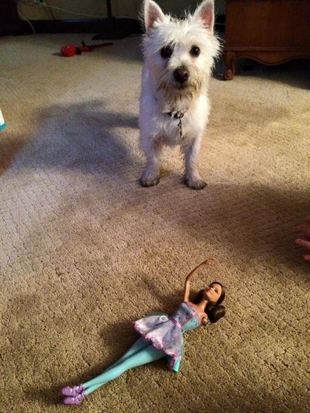 perro-barbie