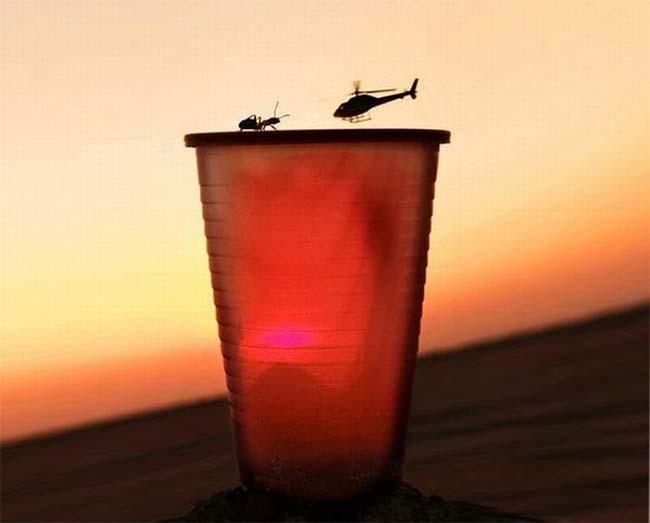 hormiga-helicoptero