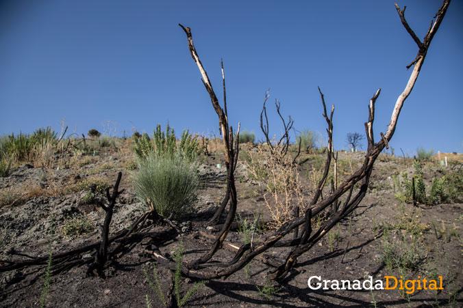 Incendio-Cenes-Recuperacion-(76-de-122)