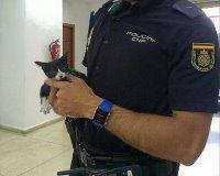 Policia rescata gatos en abandono