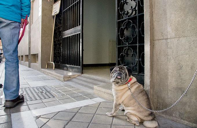 Elecciones-20D-Recursos-Curiosidades-Perro-Colegio-Mercedarias-001-GetlyArce