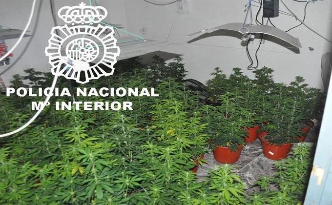 cannabis-detenido-granada-planta