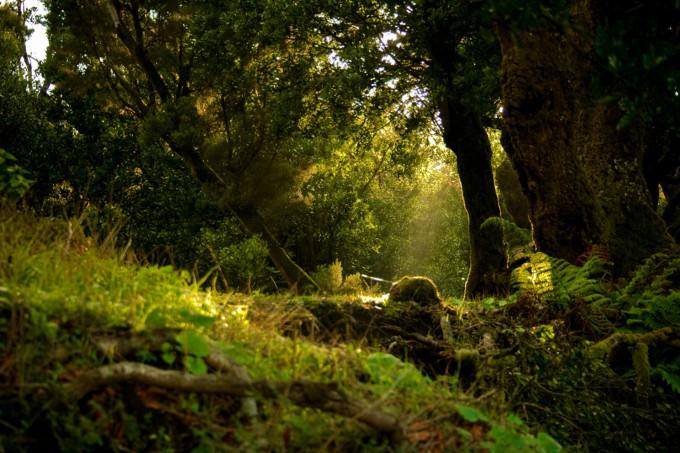 La sabiduría de los bosques o dónde podemos aparecer si escuchamos radio 3