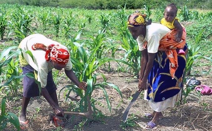 trabajadoras-tierra-agricultura