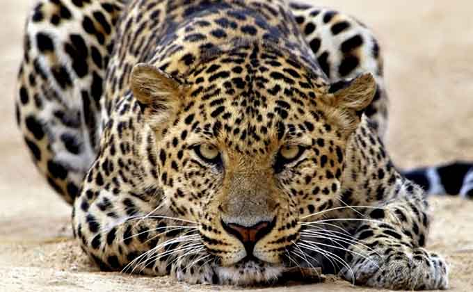 foto-de-animales-salvajes-59728
