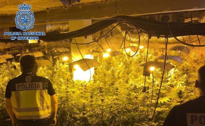plantación-cannabis-motril-marihuana