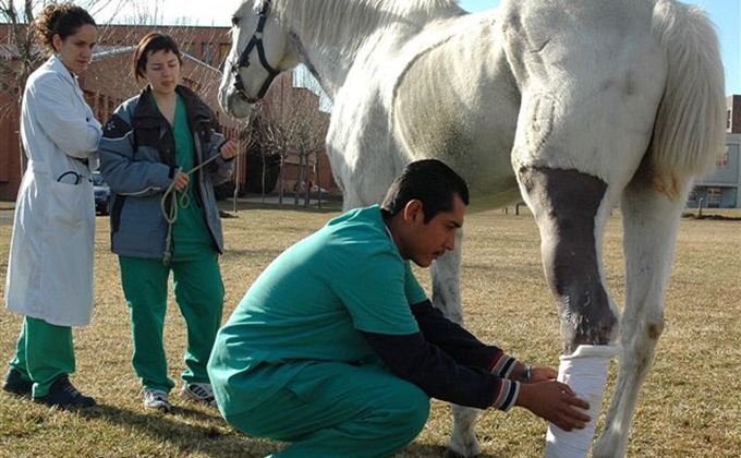 veterinario-ecuestre