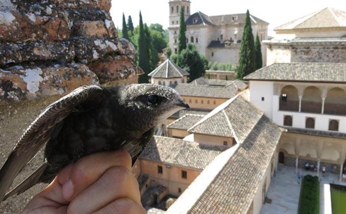 alhambra-pionero