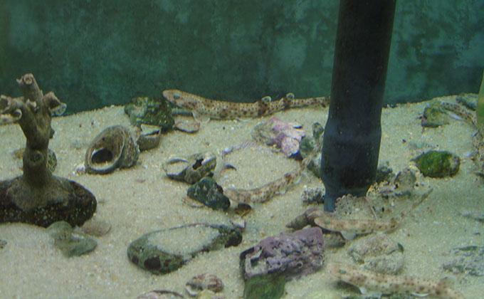pintarojas-acuario-almuñecar