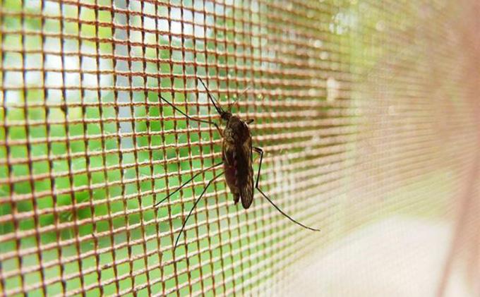 malla-insecto