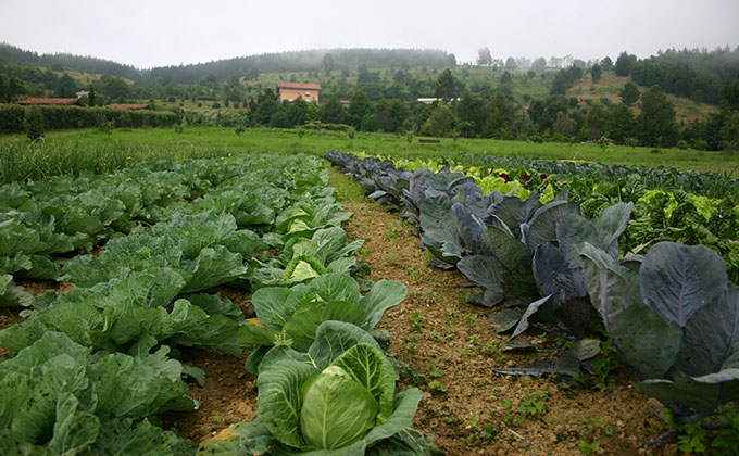 agricultura eocologica