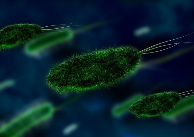 bactoria-tuberculosis