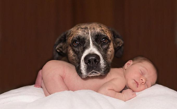 perro-bebe-mascotas-animales