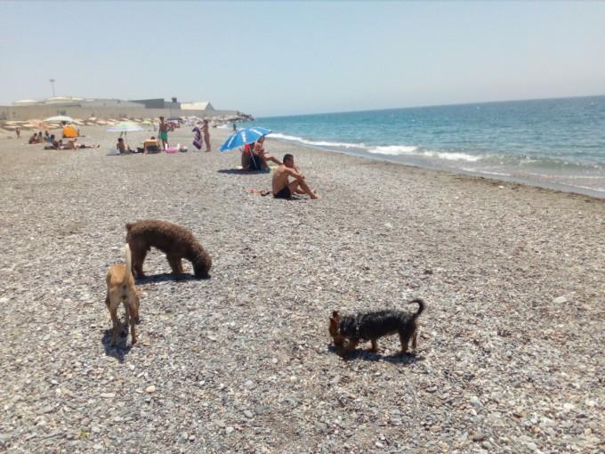 Playa de perros en Motril