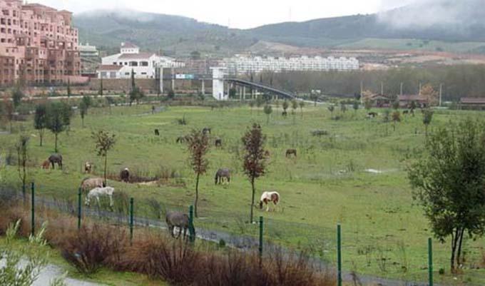 median-elvira-2