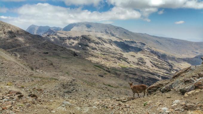 Pico del Veleta y Refugio de la Carihuela