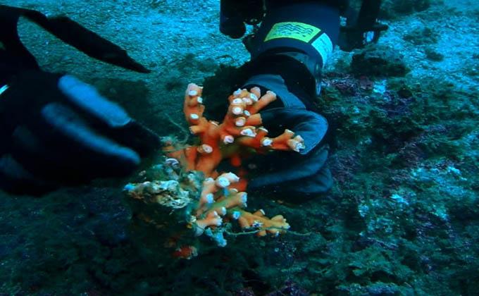 coral Granada