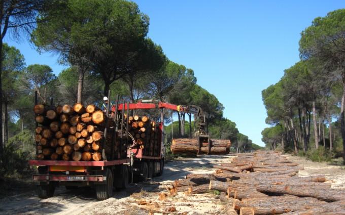 trabajos de extracción de recursos maderas árboles