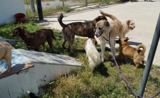 perros-protectora-animales-abandono-animal
