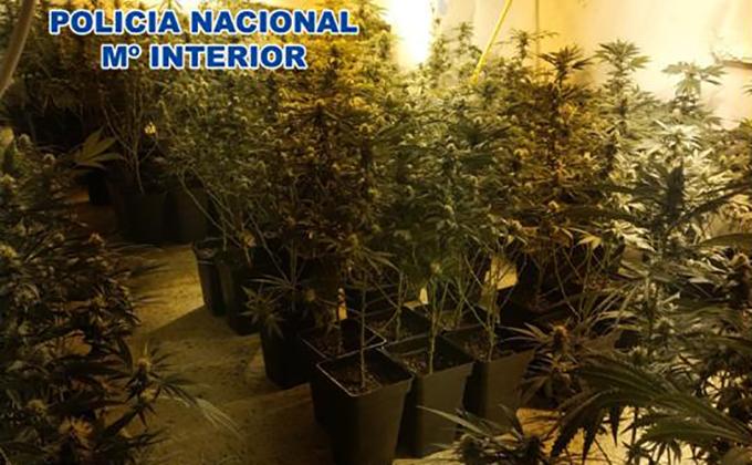 foto marihuana piso de Granda