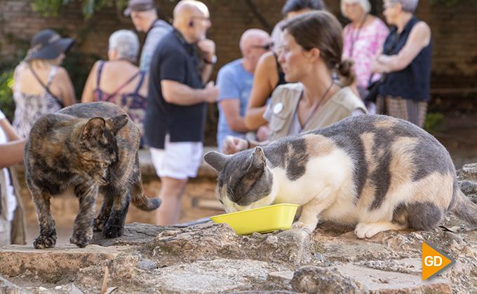 Reportaje gatos Alhambra 05
