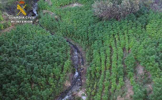 marihuana alpujarra
