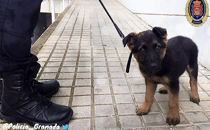 perro policia local