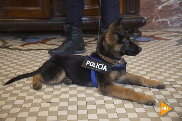Perro policia-4