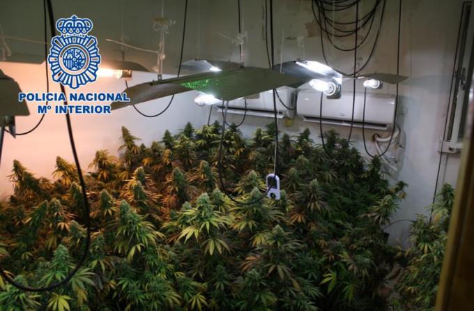 plantacion indoor Granada