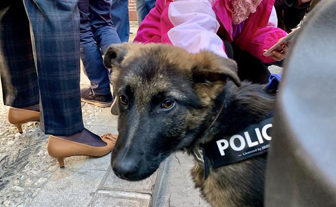 Stan Lee cumple un año como agente 'peludete' de la Policía Local de Granada
