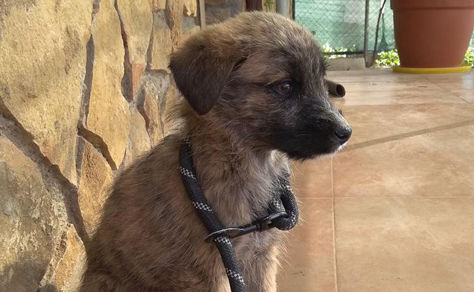 Rambo perro abandonado