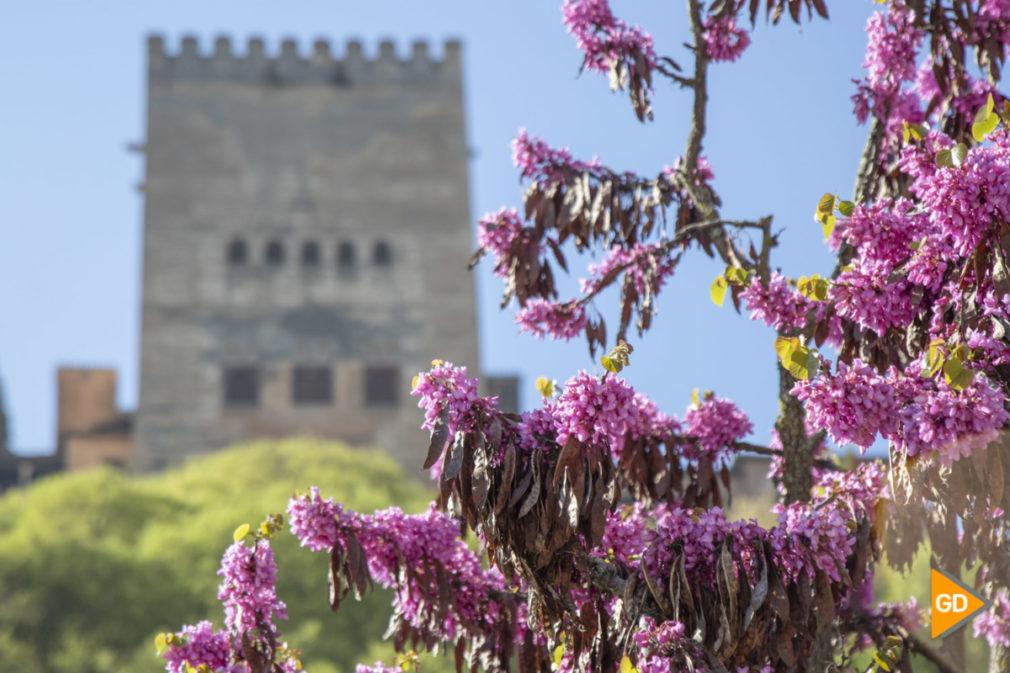 Primavera granada alhambra flores darro paseo tristes plaza nueva turismo buen tiempo-8
