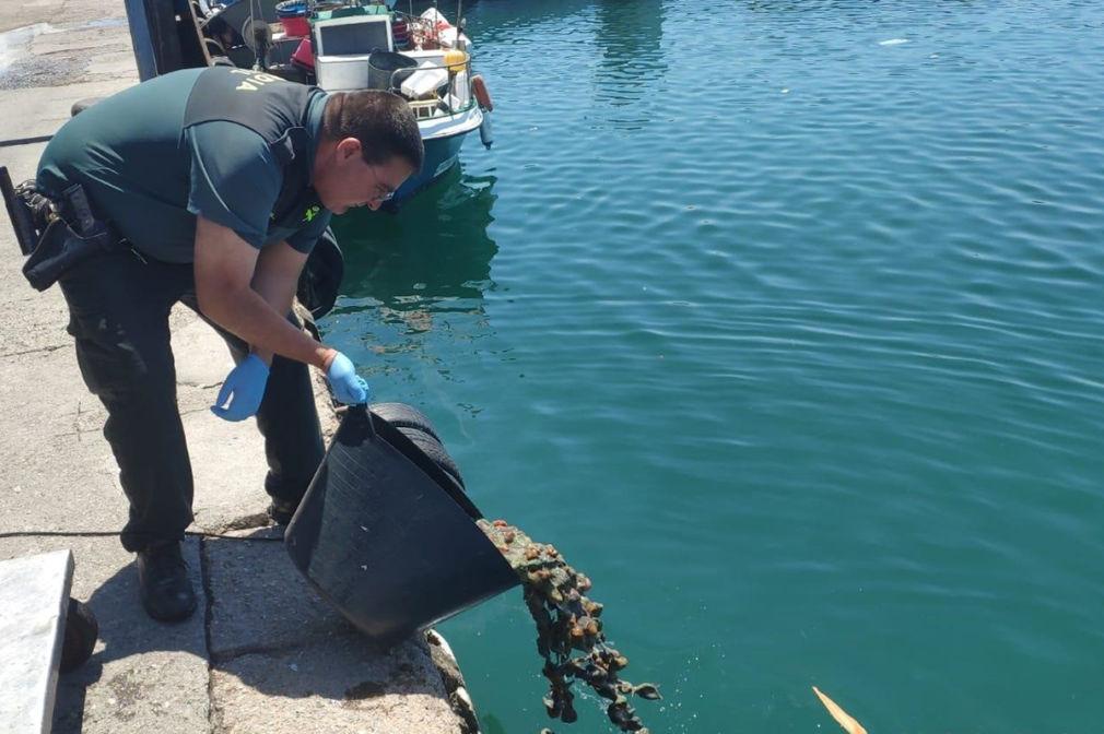 La Guardia Civil devuelve al mar a anémonas capturadas de forma ilegal