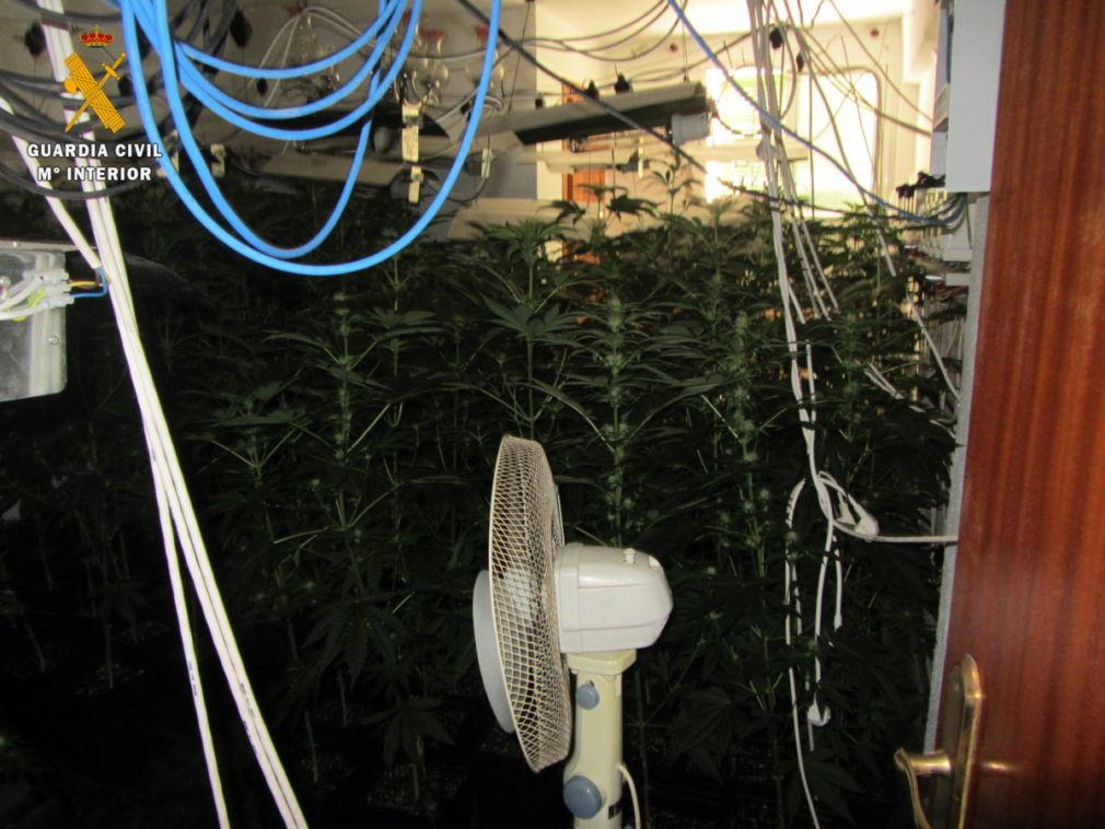 cannabis Guájar Faragüit