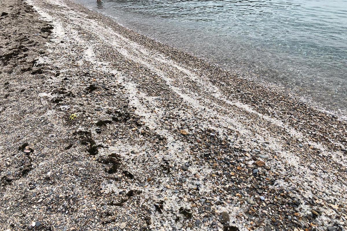 playa calahonda medusas