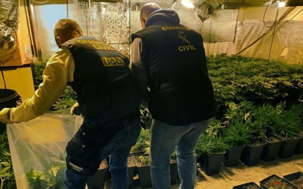 Intervención de marihuana en la operación 'Knight II'