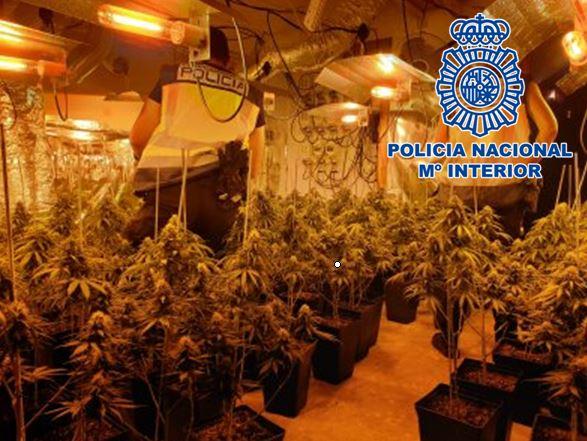 fotografia_plantacion_C