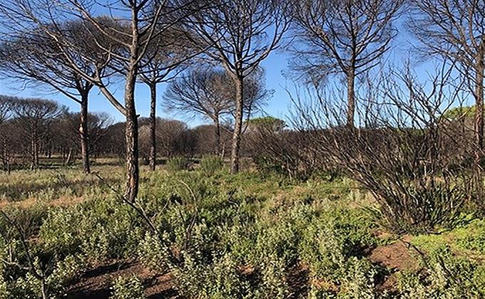 Zona afectada por el incendio de Las Penuelas en el Parque Natural de Donana