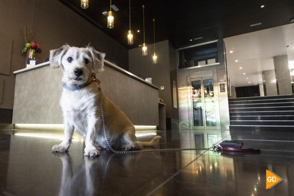 hoteles para mascotas en Granada