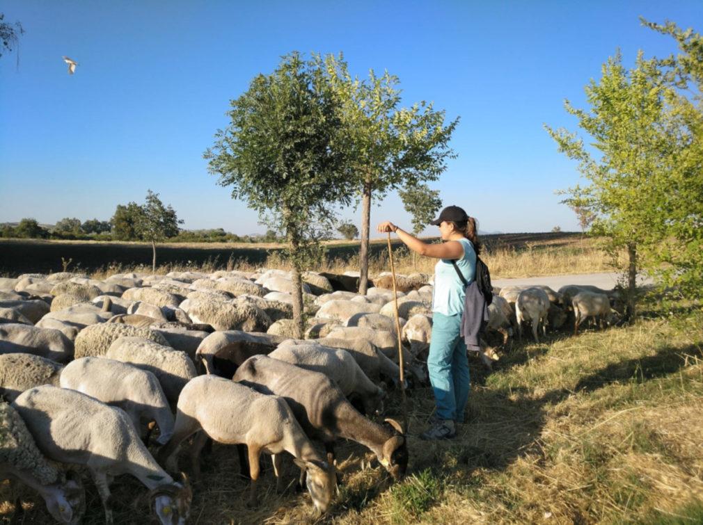 escuela pastores 2