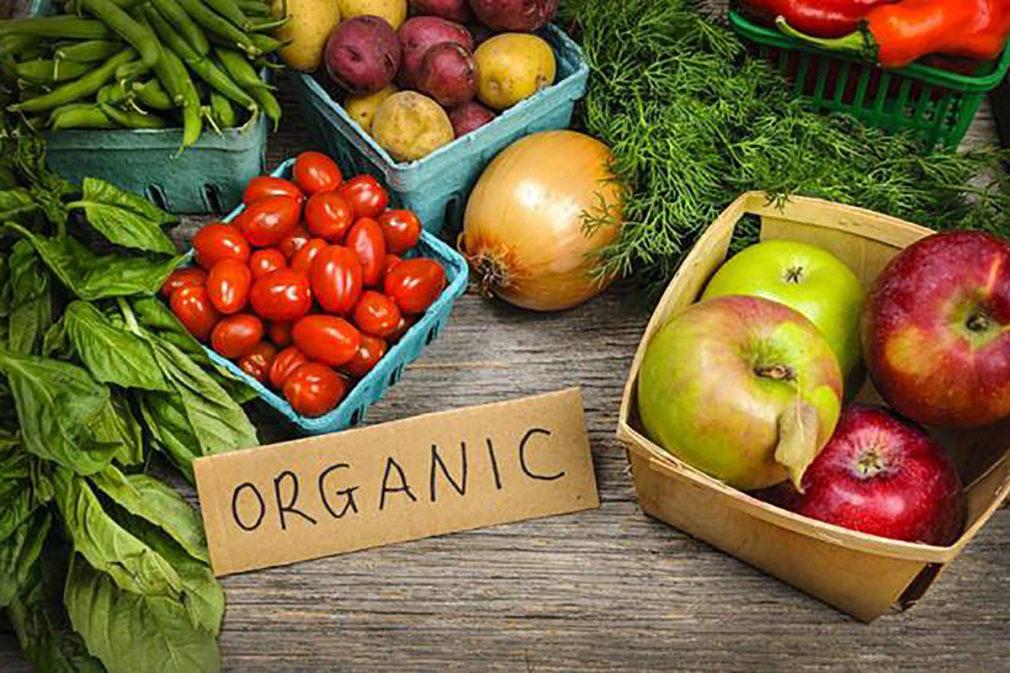 productos organicos y ecologicos