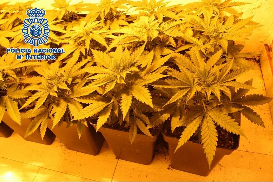 Granada.- Sucesos.- Tres detenidos tras el desmantelamiento de dos invernaderos de marihuana en el distrito Norte