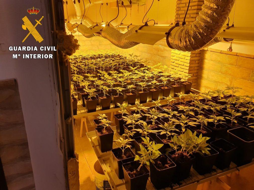 Granada.- Sucesos.- Intervenidas 656 plantas de cannabis en dos actuaciones realizadas en Huétor Vega y Fuente Vaqueros