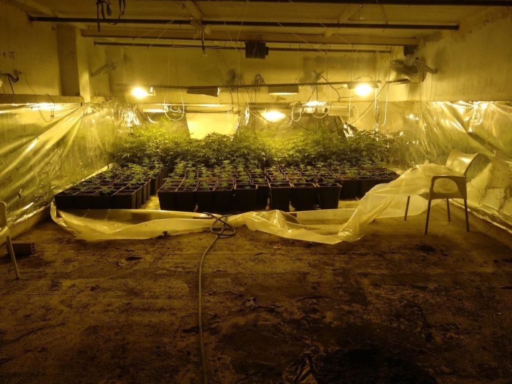 Cádiz.-Sucesos.- Cinco detenidos tras desmantelar cinco plantaciones de marihuana en Jerez y Sanlúcar