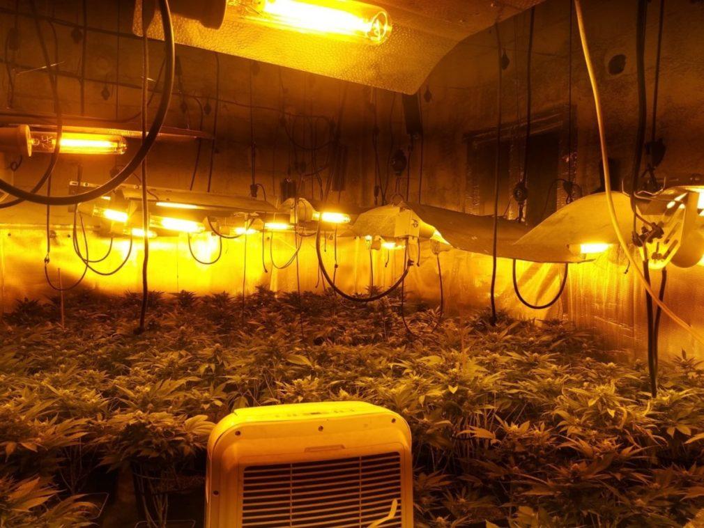 Granada.- Sucesos.- Dos detenidos tras la incautación de 393 plantas de marihuana en la capital